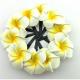 Pince pélican frangipanier jaune