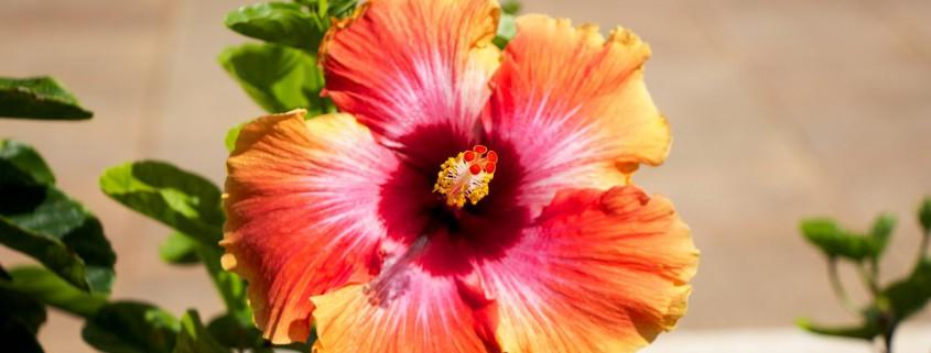 hawaii-1438855_960_720